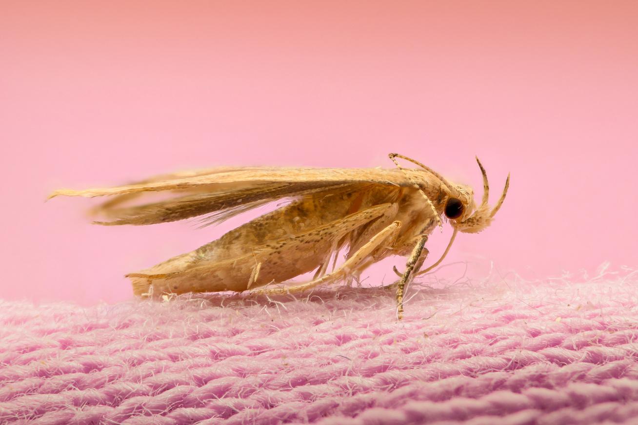 Ako chrániť vlnený koberec pred moľami?
